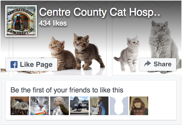 Feline Hospital in Centre County PA